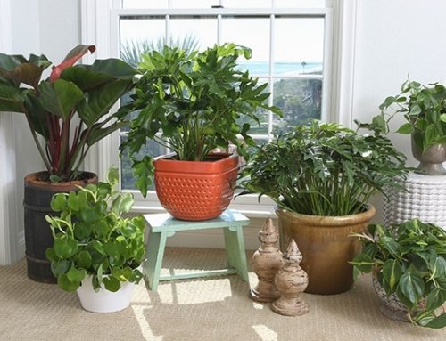 Indoor Air Cleaning Plants For A Winter Home